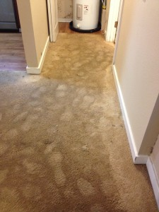 Water Extraction due to flooding of apartment carpets