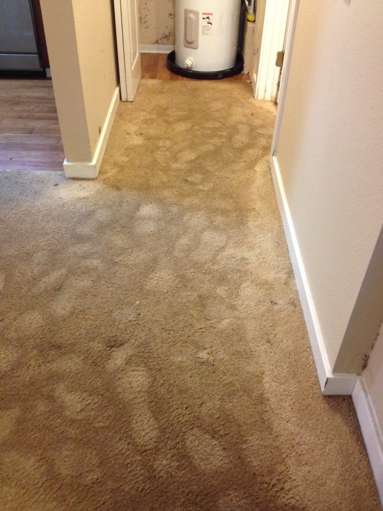 Water Extraction Centurion Carpet Cleaning