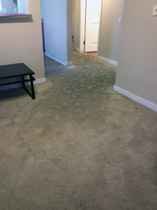 Flooded Carpet Needing Water Extraction